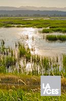 Successful Ecological Restoration: A Framework for Planning/Design Professionals Thumbnail